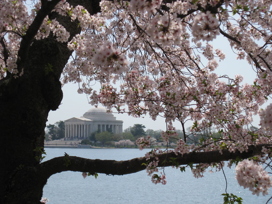 Nothing says D.C. like the iconic view of the Jefferson Memorial framed by cherry blossoms.