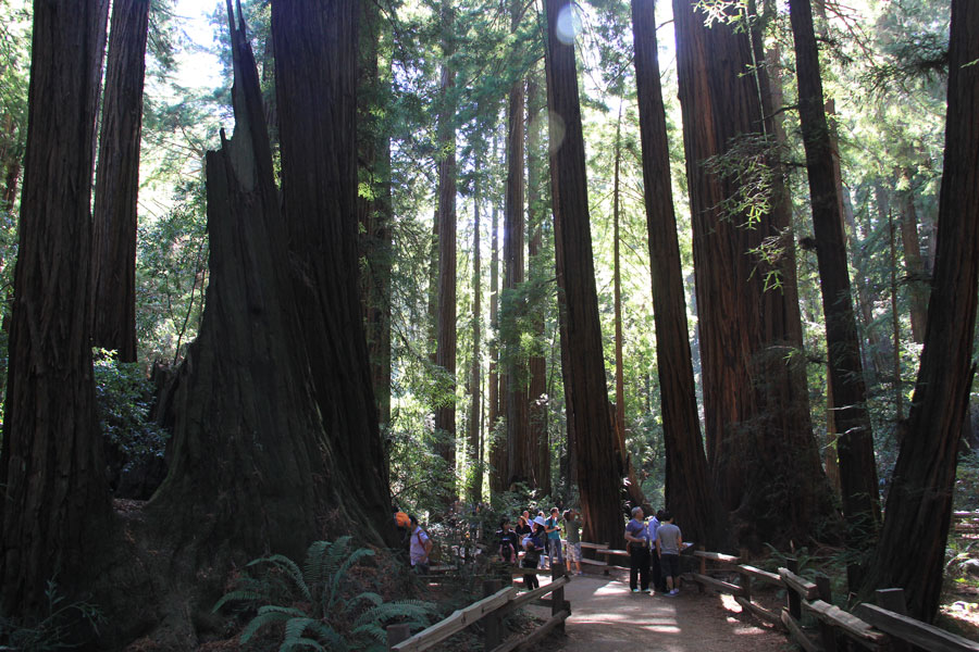 Visitors whisper in the Cathedral Grove.