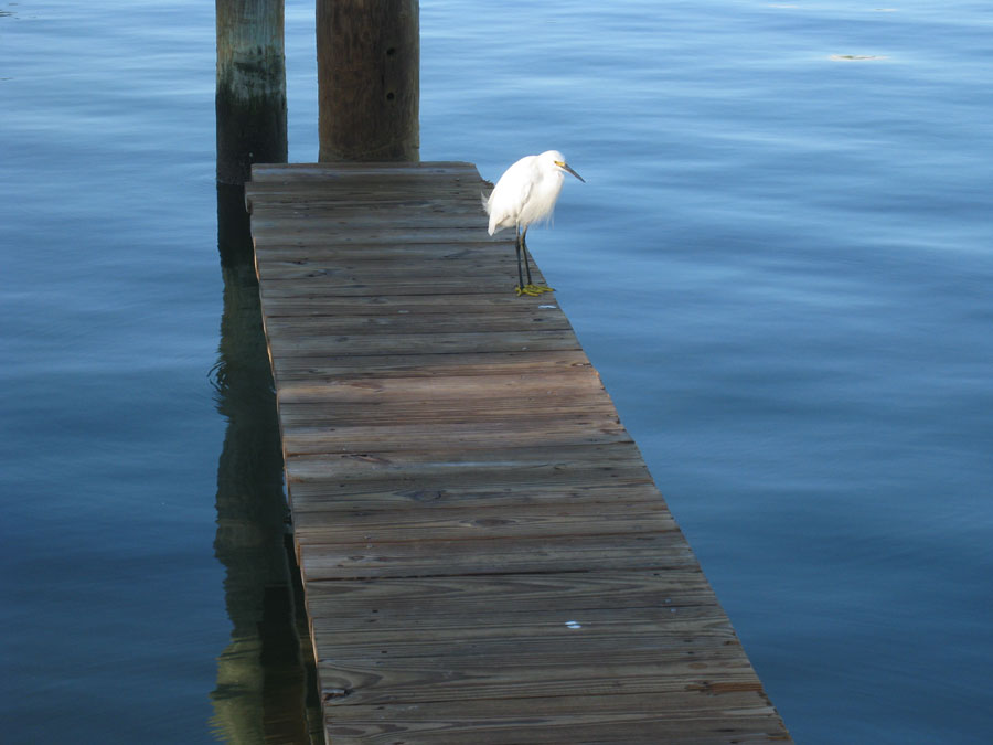 I paused for reflection at the end of the dock.
